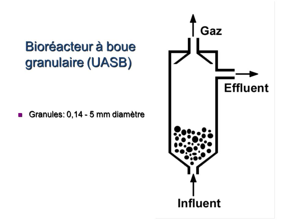 Bioréacteur à boue granulaire (UASB)