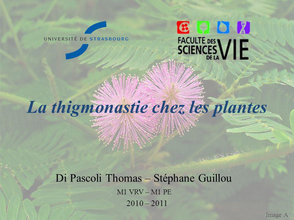 La thigmonastie chez les plantes