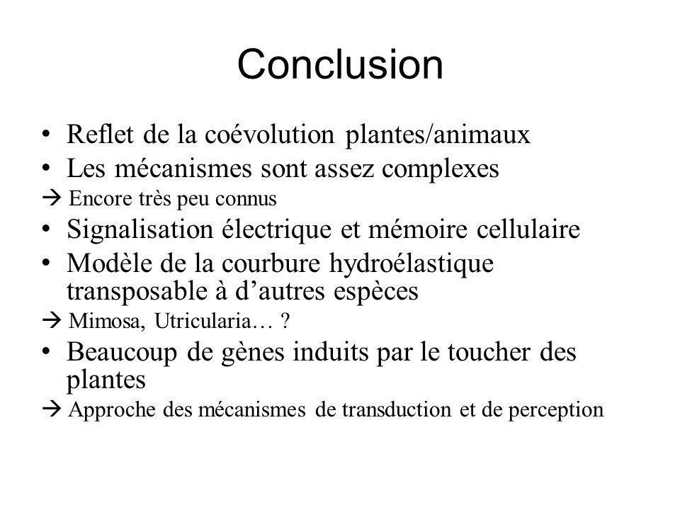 Conclusion Reflet de la coévolution plantes/animaux