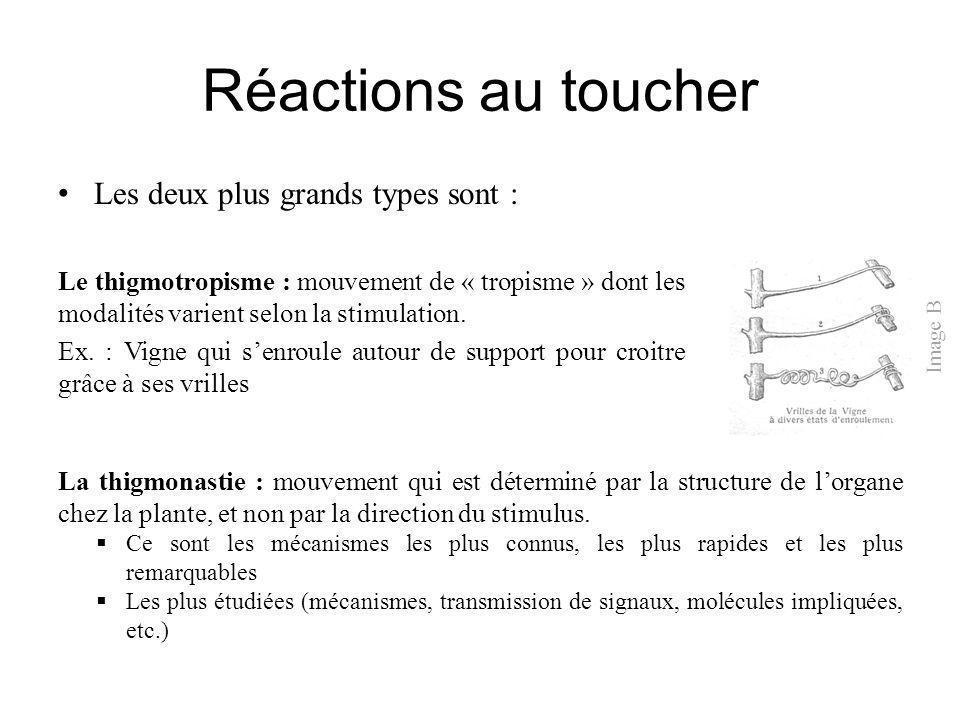 Réactions au toucher Les deux plus grands types sont :
