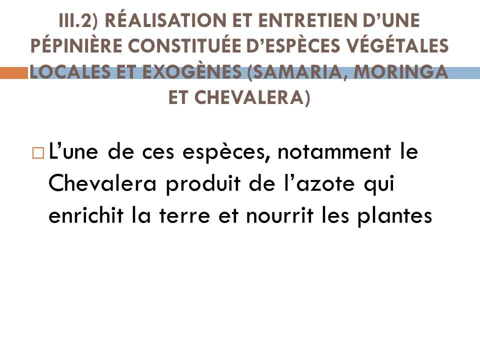 III.2) RÉALISATION ET ENTRETIEN D'UNE PÉPINIÈRE CONSTITUÉE D'ESPÈCES VÉGÉTALES LOCALES ET EXOGÈNES (SAMARIA, MORINGA ET CHEVALERA)