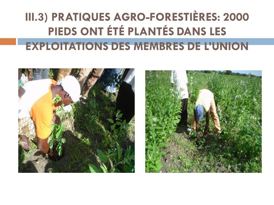 III.3) PRATIQUES AGRO-FORESTIÈRES: 2000 PIEDS ONT ÉTÉ PLANTÉS DANS LES EXPLOITATIONS DES MEMBRES DE L'UNION