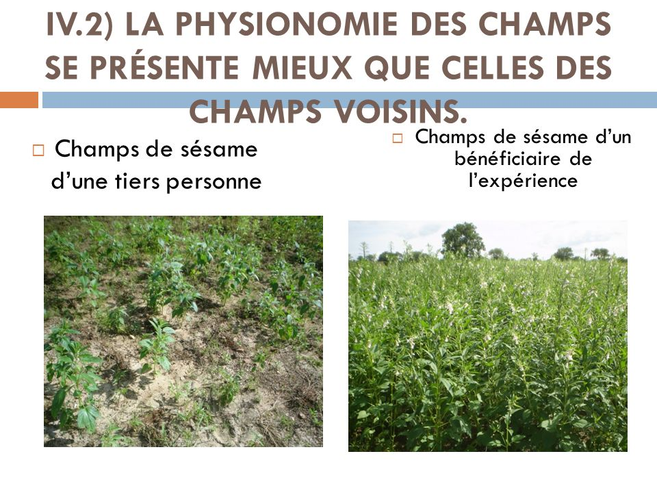 IV.2) LA PHYSIONOMIE DES CHAMPS SE PRÉSENTE MIEUX QUE CELLES DES CHAMPS VOISINS.