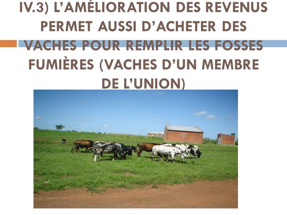 IV.3) L'AMÉLIORATION DES REVENUS PERMET AUSSI D'ACHETER DES VACHES POUR REMPLIR LES FOSSES FUMIÈRES (VACHES D'UN MEMBRE DE L'UNION)