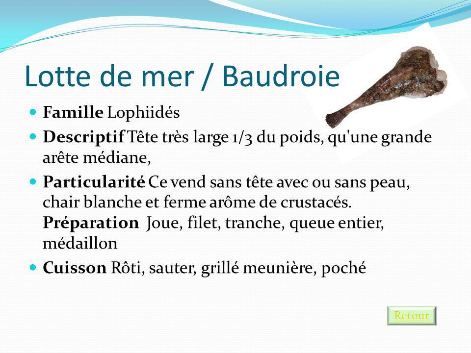 Lotte de mer / Baudroie Famille Lophiidés