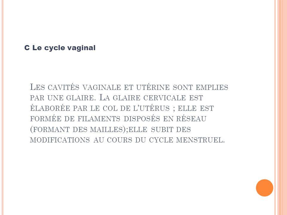 C Le cycle vaginal