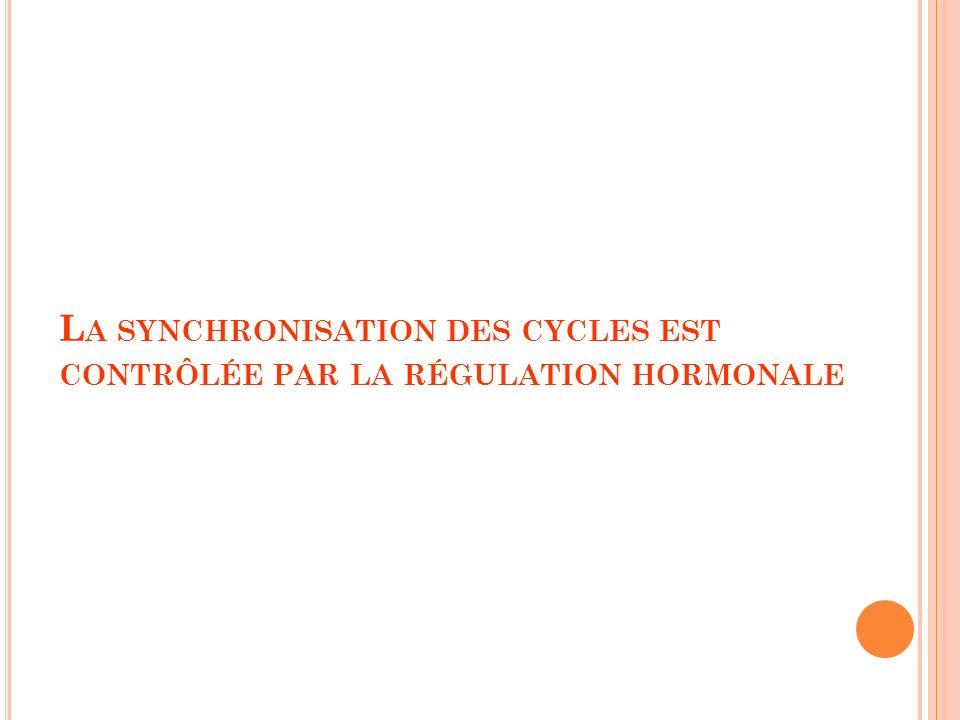La synchronisation des cycles est contrôlée par la régulation hormonale
