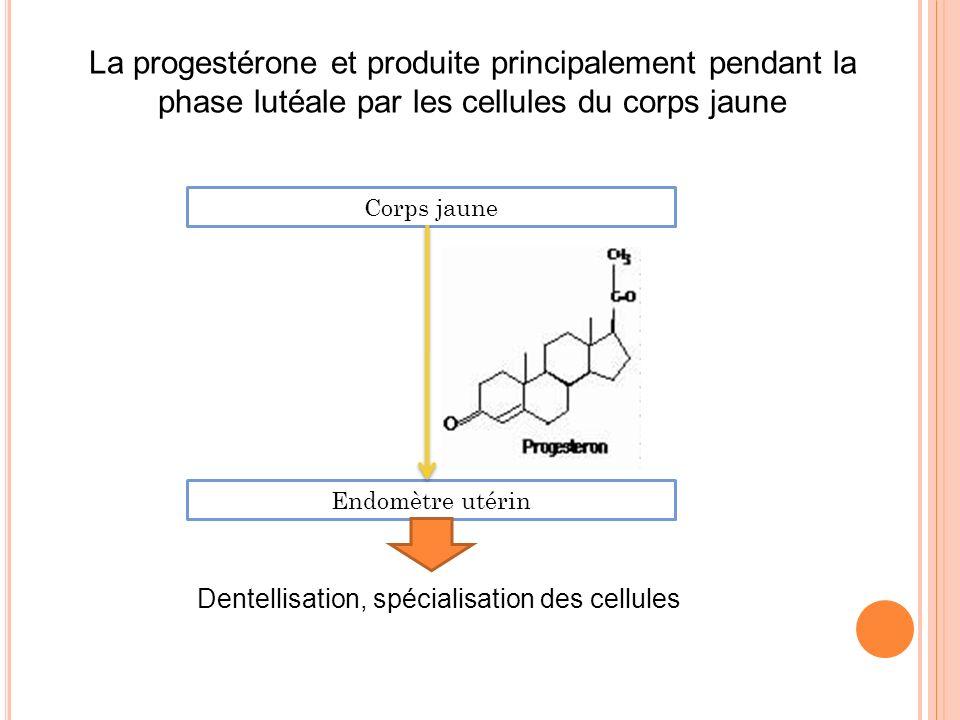 La progestérone et produite principalement pendant la phase lutéale par les cellules du corps jaune