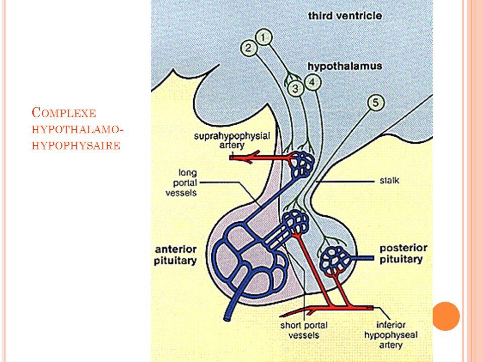 Complexe hypothalamo-hypophysaire