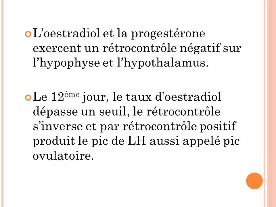 L'oestradiol et la progestérone exercent un rétrocontrôle négatif sur l'hypophyse et l'hypothalamus.