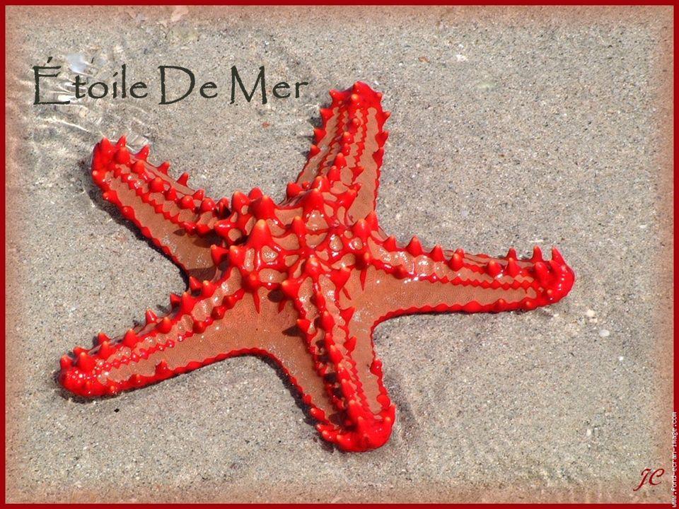 1 étoile de mer Nº 1