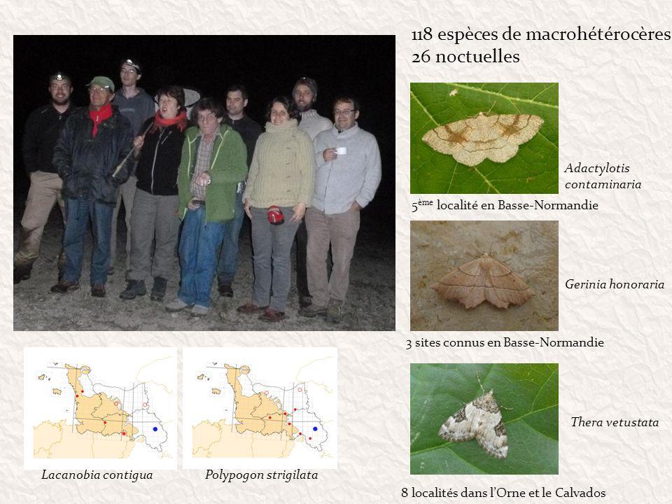 118 espèces de macrohétérocères 26 noctuelles