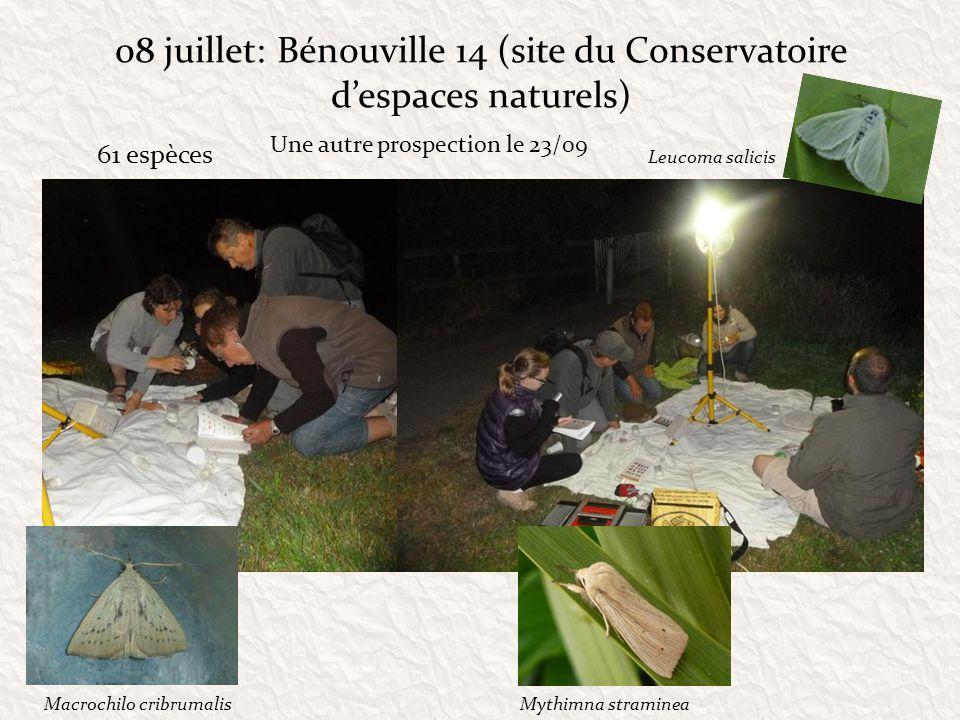 08 juillet: Bénouville 14 (site du Conservatoire d'espaces naturels)