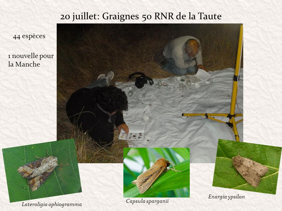 20 juillet: Graignes 50 RNR de la Taute