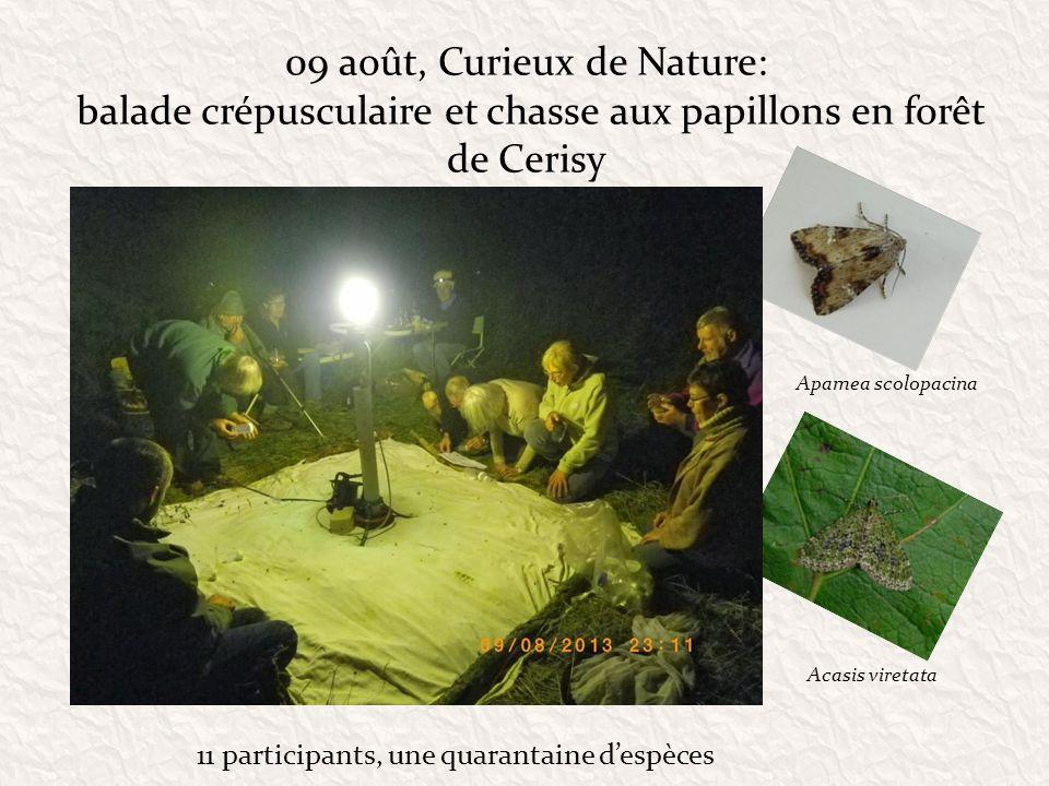 09 août, Curieux de Nature: balade crépusculaire et chasse aux papillons en forêt de Cerisy