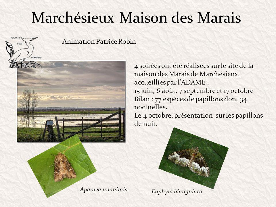 Marchésieux Maison des Marais