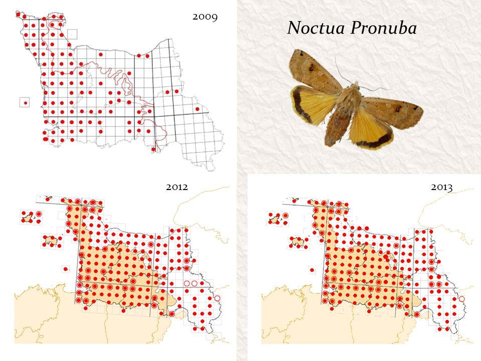 2009 Noctua Pronuba 2012 2013