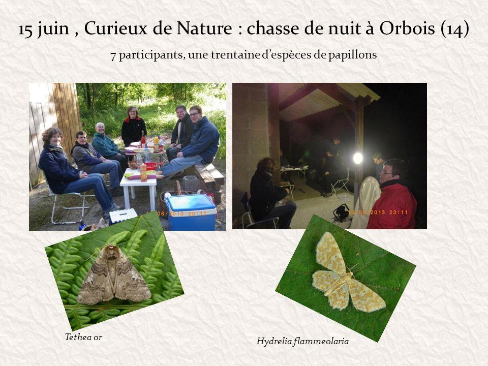 15 juin , Curieux de Nature : chasse de nuit à Orbois (14)