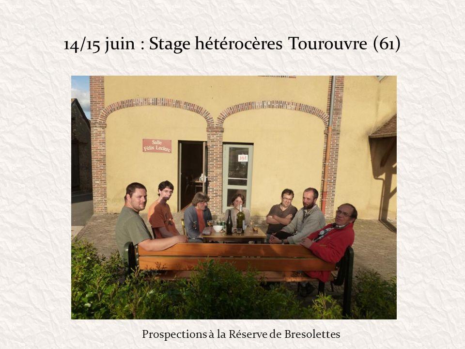 14/15 juin : Stage hétérocères Tourouvre (61)