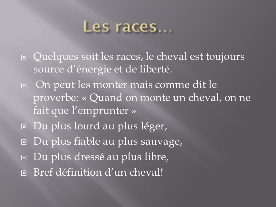 Les races… Quelques soit les races, le cheval est toujours source d'énergie et de liberté.