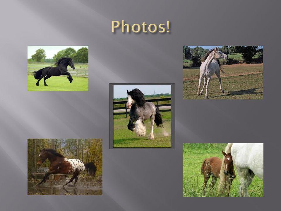 Photos!