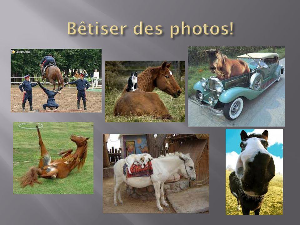 Bêtiser des photos!