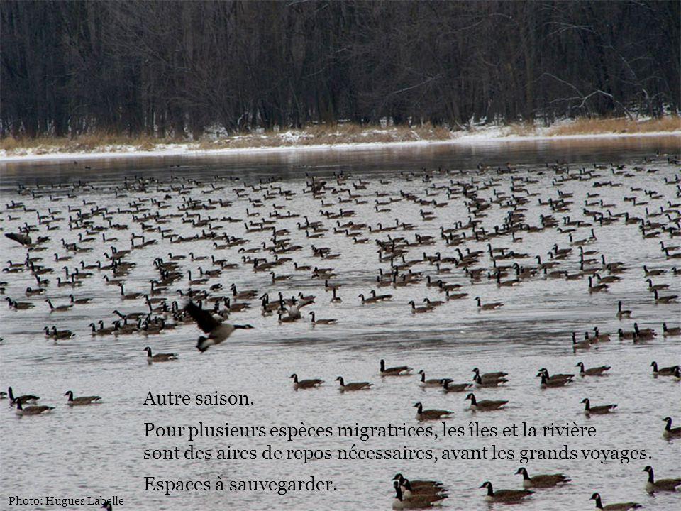 Pour plusieurs espèces migratrices, les îles et la rivière