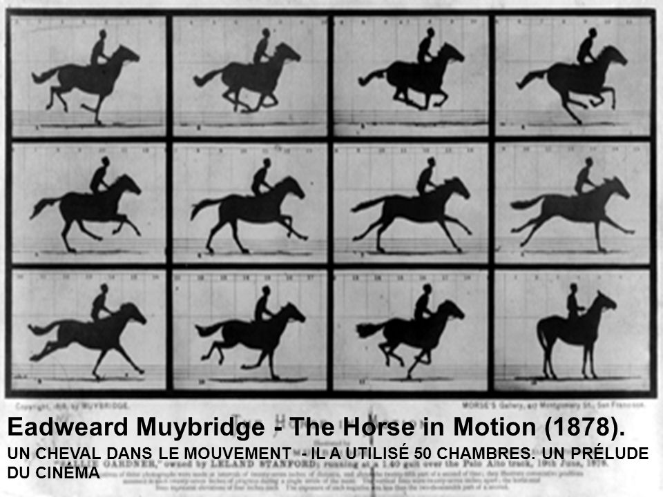 Eadweard Muybridge - The Horse in Motion (1878)