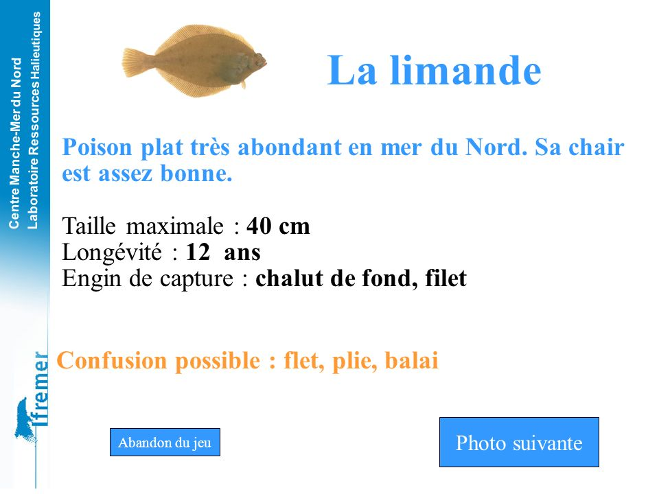 La limande Poison plat très abondant en mer du Nord. Sa chair est assez bonne. Taille maximale : 40 cm.