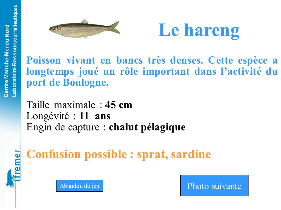 Le hareng Confusion possible : sprat, sardine