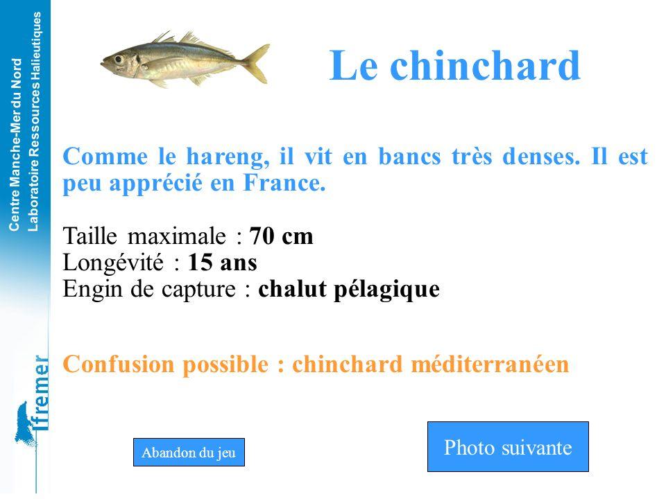 Le chinchard Comme le hareng, il vit en bancs très denses. Il est peu apprécié en France. Taille maximale : 70 cm.