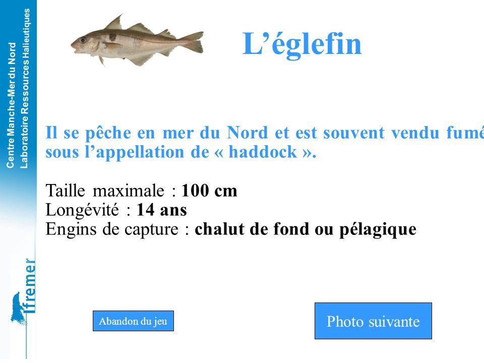 L'églefin Il se pêche en mer du Nord et est souvent vendu fumé sous l'appellation de « haddock ». Taille maximale : 100 cm.