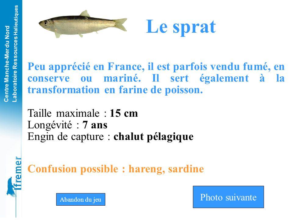 Le sprat Peu apprécié en France, il est parfois vendu fumé, en conserve ou mariné. Il sert également à la transformation en farine de poisson.