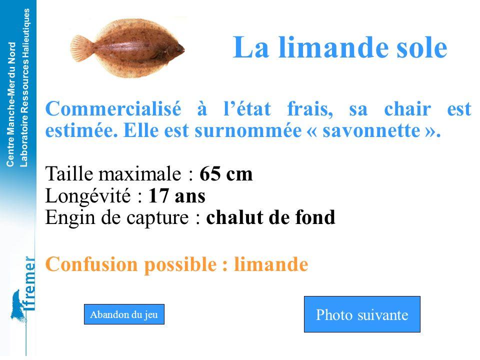 La limande sole Commercialisé à l'état frais, sa chair est estimée. Elle est surnommée « savonnette ».