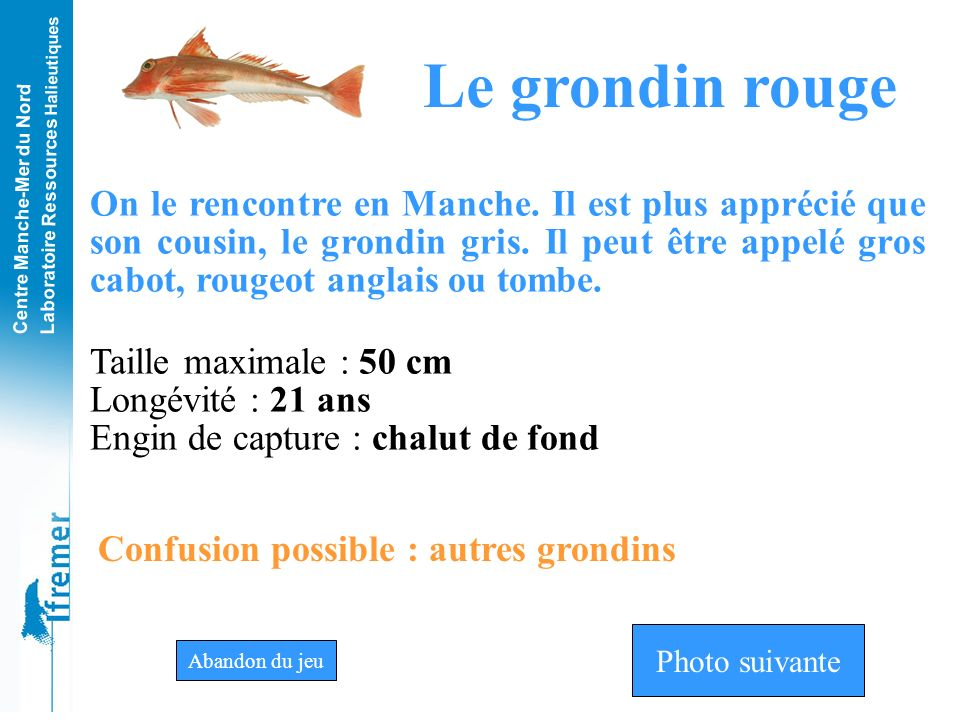 Le grondin rouge