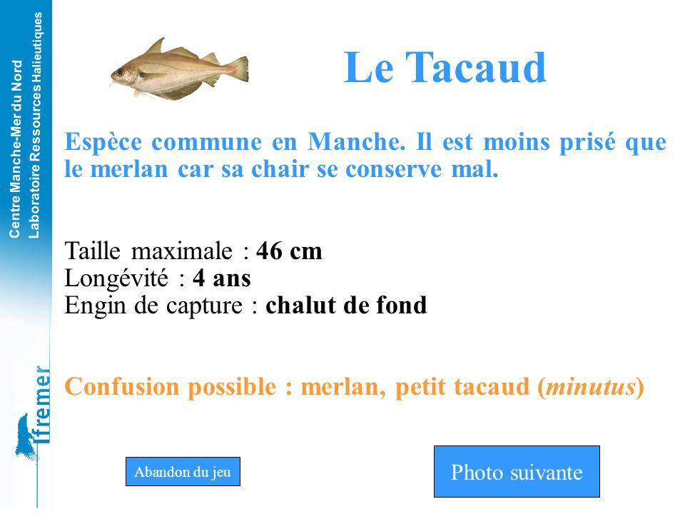 Le Tacaud Espèce commune en Manche. Il est moins prisé que le merlan car sa chair se conserve mal. Taille maximale : 46 cm.