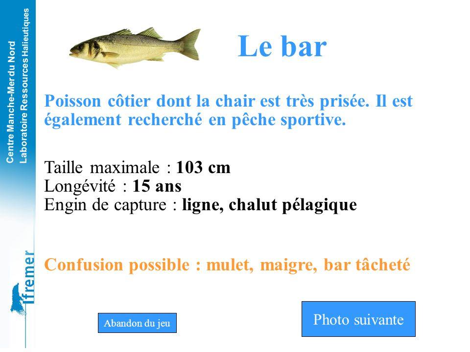 Le bar Poisson côtier dont la chair est très prisée. Il est également recherché en pêche sportive. Taille maximale : 103 cm.