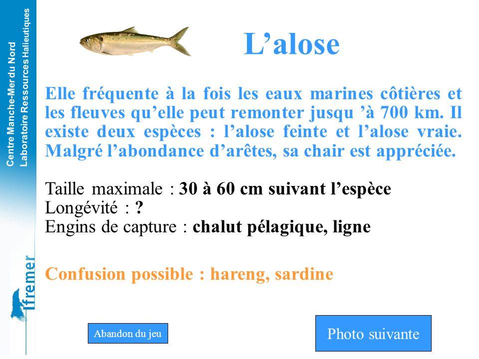 L'alose