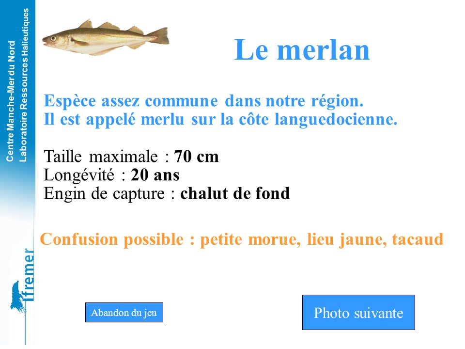 Le merlan Espèce assez commune dans notre région.
