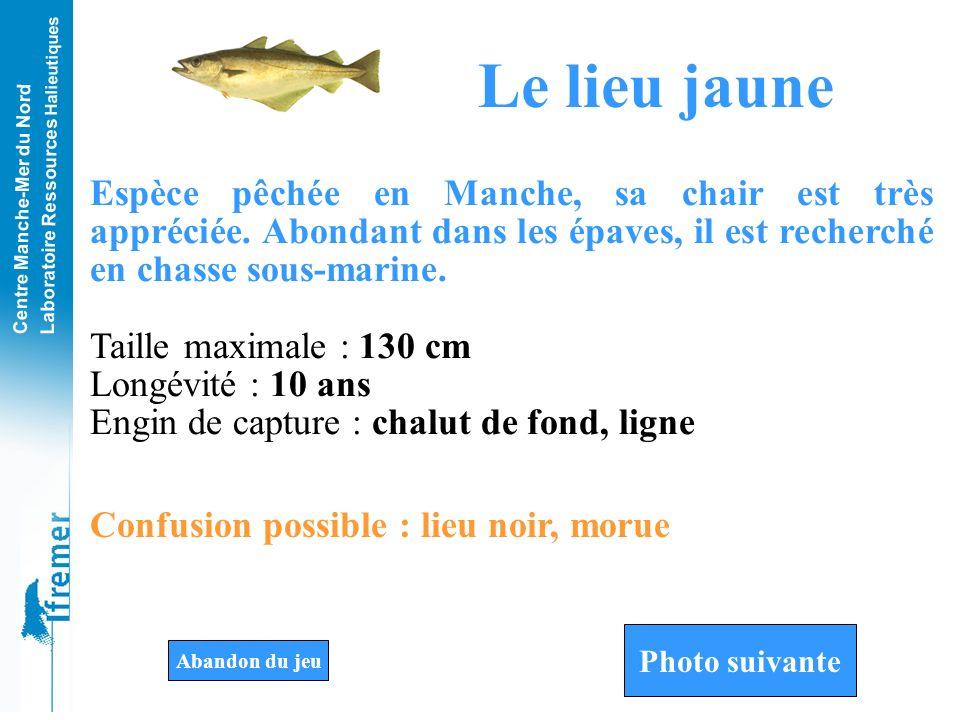 Le lieu jaune Espèce pêchée en Manche, sa chair est très appréciée. Abondant dans les épaves, il est recherché en chasse sous-marine.