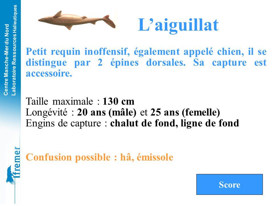 L'aiguillat Petit requin inoffensif, également appelé chien, il se distingue par 2 épines dorsales. Sa capture est accessoire.