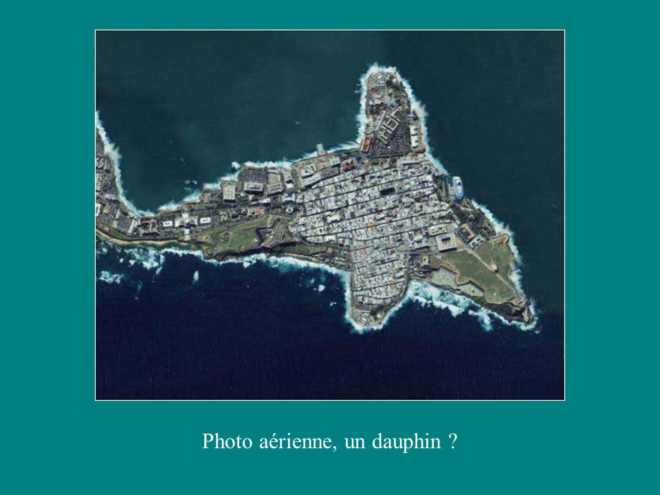 Photo aérienne, un dauphin