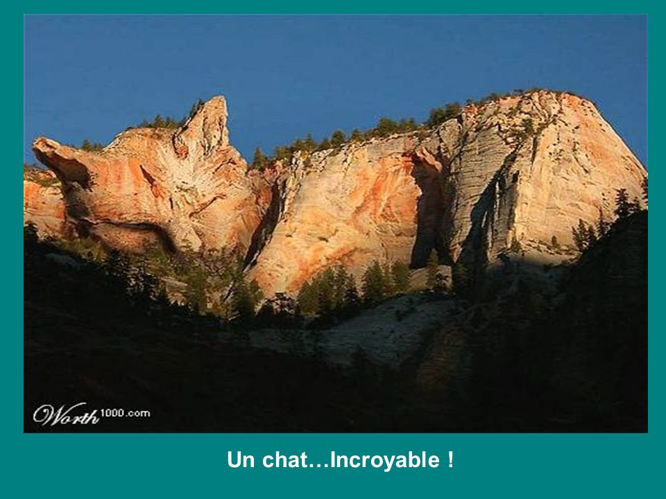 Un chat…Incroyable !