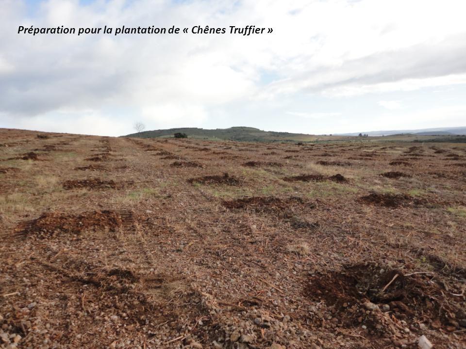 Préparation pour la plantation de « Chênes Truffier »