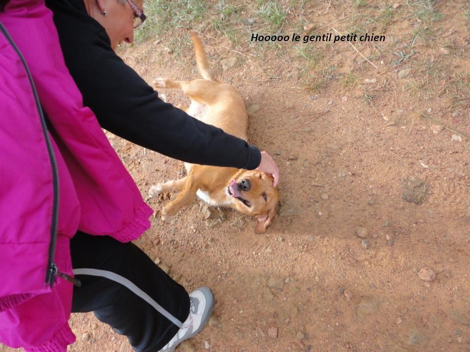 Hooooo le gentil petit chien