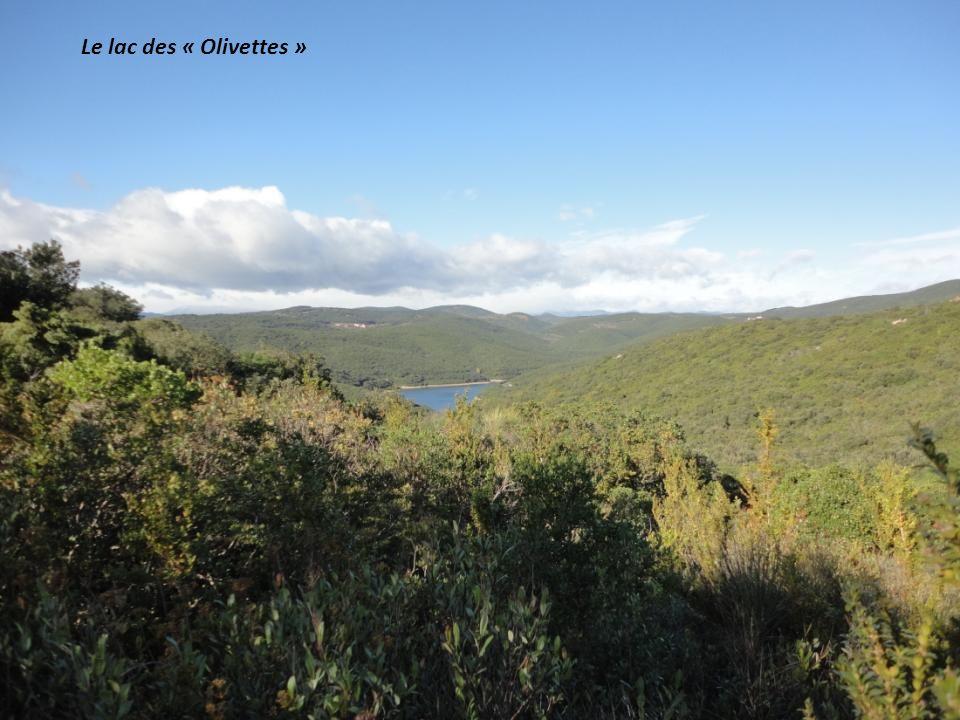 Le lac des « Olivettes »