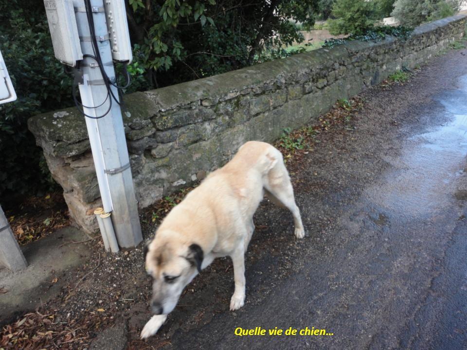 Quelle vie de chien…