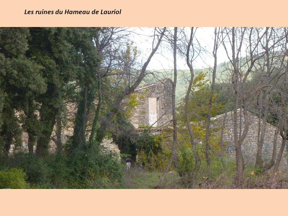 Les ruines du Hameau de Lauriol