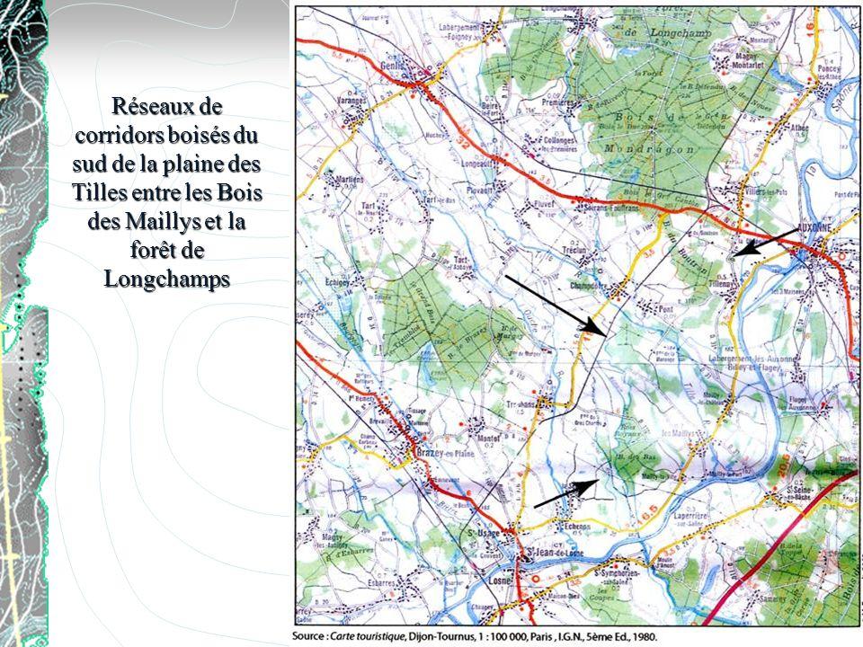 Réseaux de corridors boisés du sud de la plaine des Tilles entre les Bois des Maillys et la forêt de Longchamps