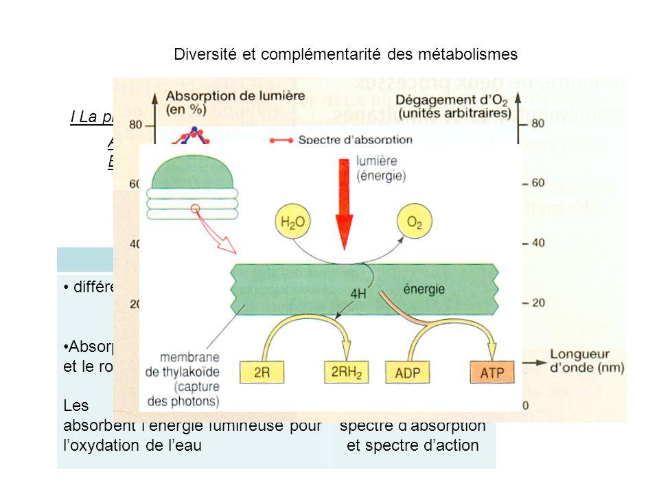 Comparaison spectre d'absorption et spectre d'action